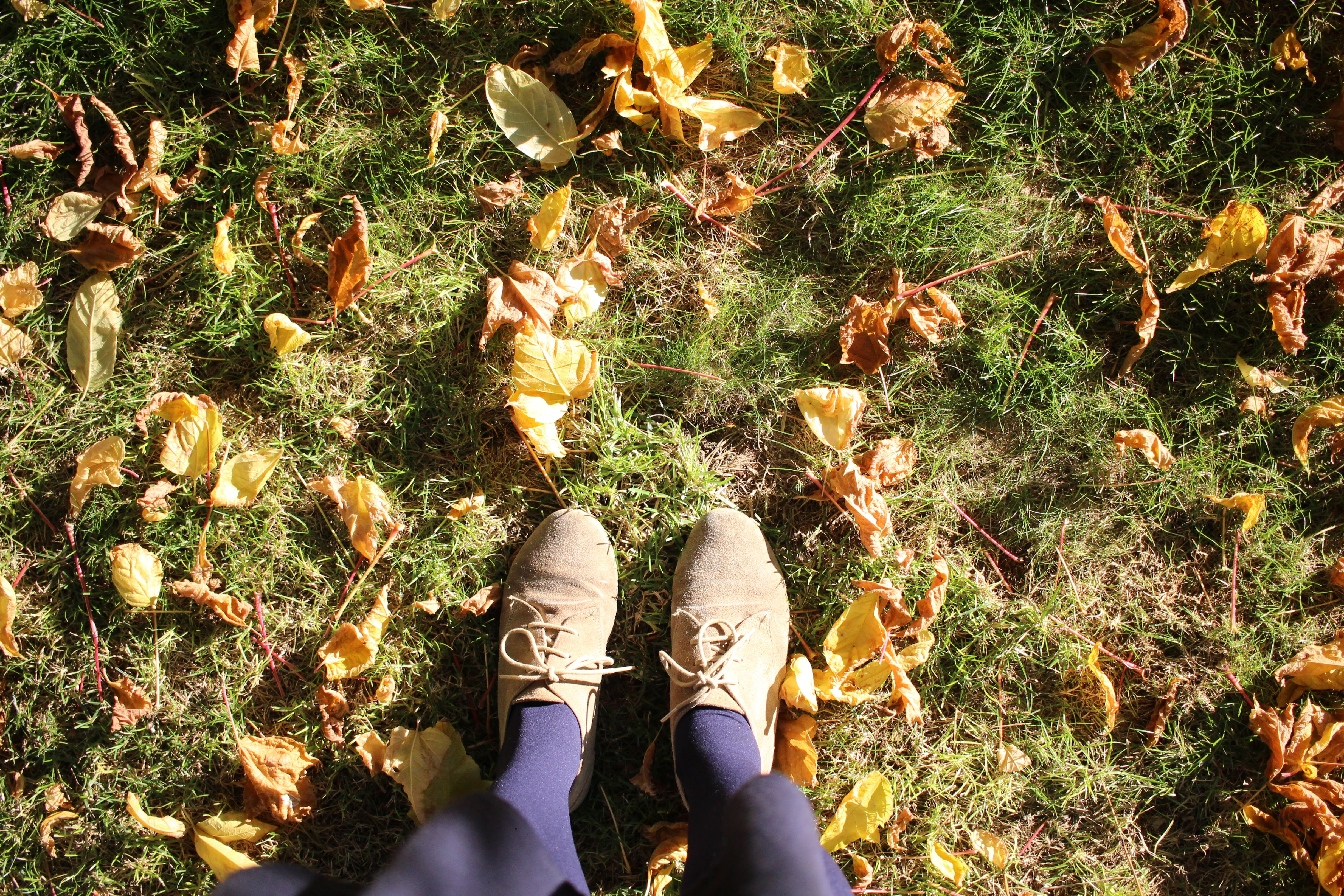 Rediscovering Autumn